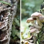 Op paddenstoelen jacht