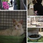 Torre Argentina het huis van honderden verlaten katten