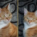 Cat: Mieps mijn modelletje