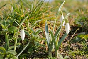 De lente is genieten