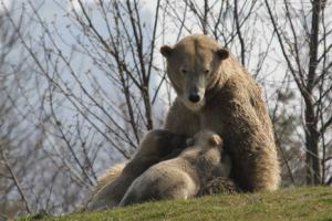 Diergaarde blijdorp ijsberen