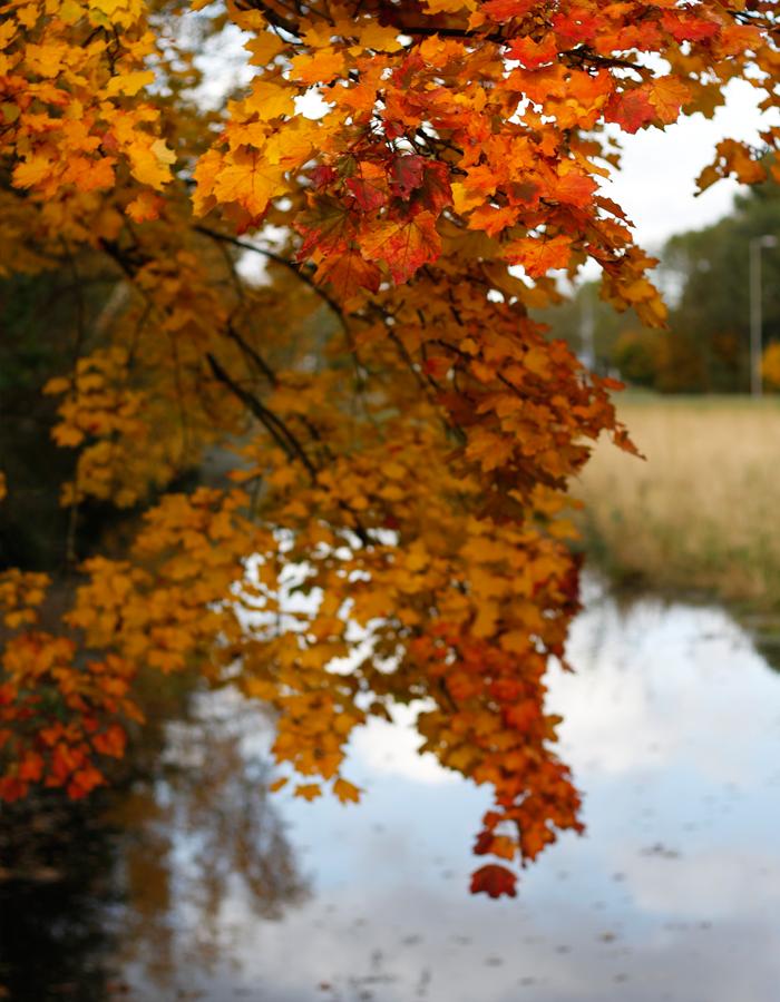 Paddenstoelen,-herten-en-volop-herfst-4