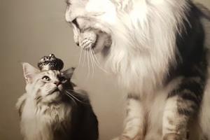 Een bezoekje aan; Kattenliefde in de kunsthal