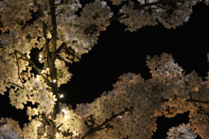 bloesemboom