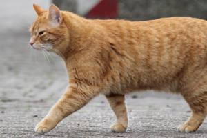 Katten van het dorp